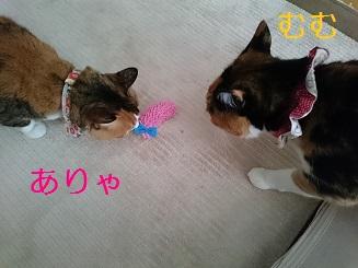 DSC_0337 - コピー.JPG